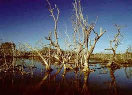 Damaged Mangrove Forest